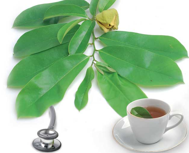 Benefits of soursop leaf twenty six for health and sweetness